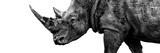 Safari Profile Collection - Rhino White Edition III Photographic Print by Philippe Hugonnard