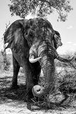 Awesome South Africa Collection B&W - Elephant III Photographic Print by Philippe Hugonnard