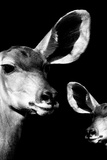 Safari Profile Collection - Antelope and Baby Black Edition VI Photographic Print by Philippe Hugonnard