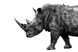 Safari Profile Collection - Rhino White Edition Photographic Print by Philippe Hugonnard