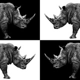 Safari Profile Collection - Rhinos II Photographic Print by Philippe Hugonnard