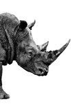 Safari Profile Collection - Rhino White Edition IV Photographic Print by Philippe Hugonnard