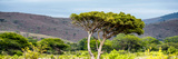 Awesome South Africa Collection Panoramic - Lone Acacia Tree Photographic Print by Philippe Hugonnard