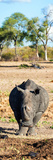 Awesome South Africa Collection Panoramic - Black Rhino Photographic Print by Philippe Hugonnard