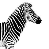 Safari Profile Collection - Zebra White Edition II Photographic Print by Philippe Hugonnard