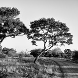 Awesome South Africa Collection Square - Safari Road Photographic Print by Philippe Hugonnard