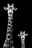 Safari Profile Collection - Giraffe and Baby Black Edition II Photographic Print by Philippe Hugonnard