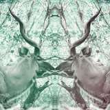 Awesome South Africa Collection Square - Reflection of Greater Kudu - Coral Green & Dimgray Photographic Print by Philippe Hugonnard