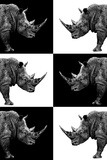 Safari Profile Collection - Rhinos Photographic Print by Philippe Hugonnard
