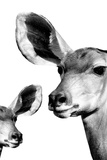 Safari Profile Collection - Antelope and Baby White Edition VI Photographic Print by Philippe Hugonnard
