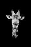 Safari Profile Collection - Portrait of Giraffe Black Edition II Photographic Print by Philippe Hugonnard