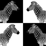 Safari Profile Collection - Zebras II Photographic Print by Philippe Hugonnard
