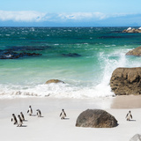 Awesome South Africa Collection Square - Group of Penguins at Boulders Beach II Photographic Print by Philippe Hugonnard