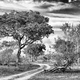 Awesome South Africa Collection Square - African Safari Road B&W Photographic Print by Philippe Hugonnard