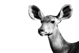 Safari Profile Collection - Antelope Impala Portrait White Edition II Photographic Print by Philippe Hugonnard