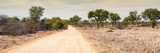 Awesome South Africa Collection Panoramic - Road in Savannah Photographic Print by Philippe Hugonnard