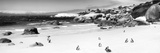 Awesome South Africa Collection Panoramic - Penguins at Boulders Beach B&W Photographic Print by Philippe Hugonnard