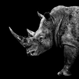 Safari Profile Collection - Rhino Black Edition II Photographic Print by Philippe Hugonnard