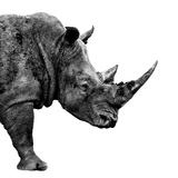 Safari Profile Collection - Rhino White Edition II Photographic Print by Philippe Hugonnard
