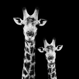 Safari Profile Collection - Portrait of Giraffe and Baby Black Edition II Photographic Print by Philippe Hugonnard