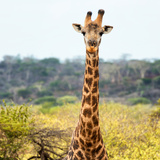 Awesome South Africa Collection Square - Portrait of Giraffe Photographic Print by Philippe Hugonnard