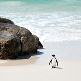 Awesome South Africa Collection Square - Penguin Alone on the Beach Photographic Print by Philippe Hugonnard