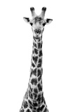 Safari Profile Collection - Giraffe White Edition VIII Fotografisk tryk af Philippe Hugonnard