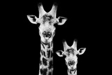 Safari Profile Collection - Portrait of Giraffe and Baby Black Edition VI Photographic Print by Philippe Hugonnard