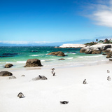 Awesome South Africa Collection Square - Colony of Penguins II Photographic Print by Philippe Hugonnard