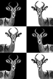 Safari Profile Collection - Antelopes Photographic Print by Philippe Hugonnard