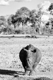 Awesome South Africa Collection B&W - White Rhino Photographic Print by Philippe Hugonnard