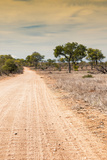 Awesome South Africa Collection - Road in the African Savannah I Photographic Print by Philippe Hugonnard