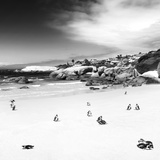 Awesome South Africa Collection Square - Colony of Penguins B&W Fotografisk tryk af Philippe Hugonnard