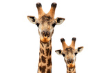 Safari Profile Collection - Portrait of Giraffe and Baby White Edition V Photographic Print by Philippe Hugonnard