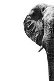 Safari Profile Collection - Elephant White Edition III Photographic Print by Philippe Hugonnard
