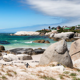 Awesome South Africa Collection Square - African Penguins at Boulders Beach III Photographic Print by Philippe Hugonnard