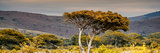 Awesome South Africa Collection Panoramic - Lone Acacia Tree II Photographic Print by Philippe Hugonnard