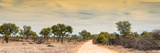 Awesome South Africa Collection Panoramic - Road in Savannah at Sunset Photographic Print by Philippe Hugonnard