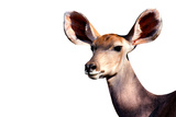 Safari Profile Collection - Antelope Impala Portrait White Edition Photographic Print by Philippe Hugonnard