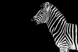 Safari Profile Collection - Zebra Black Edition Photographic Print by Philippe Hugonnard