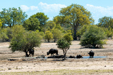 Awesome South Africa Collection - African Buffalo Herd Photographic Print by Philippe Hugonnard