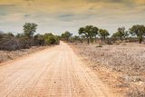 Awesome South Africa Collection - Road in the African Savannah Photographic Print by Philippe Hugonnard