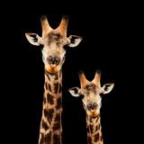 Safari Profile Collection - Portrait of Giraffe and Baby Black Edition Fotoprint av Philippe Hugonnard