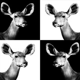 Safari Profile Collection - Antelopes Impalas Portraits II Photographic Print by Philippe Hugonnard