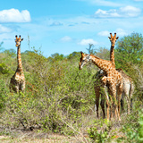 Awesome South Africa Collection Square - Herd of Giraffes Photographic Print by Philippe Hugonnard