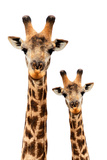 Safari Profile Collection - Portrait of Giraffe and Baby White Edition III Photographic Print by Philippe Hugonnard