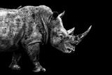 Safari Profile Collection - Rhino Black Edition Photographic Print by Philippe Hugonnard