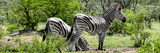 Awesome South Africa Collection Panoramic - Zebras Africa Photographic Print by Philippe Hugonnard