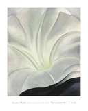 Morning Glory with Black, 1926 Poster von Georgia O'Keeffe