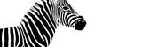 Safari Profile Collection - Zebra White Edition IV Photographic Print by Philippe Hugonnard